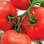 Семена томатов Мобил фото