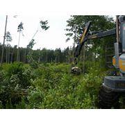 Расчистка и санитарная вырубка леса фото