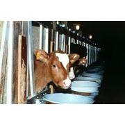 Заменитель молока Nutex 68 фото