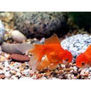 Рыбки аквариумные фото