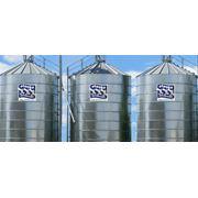 Зерно: ячмень пшеница рожь горох рапс фото