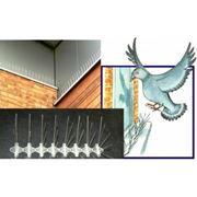 Защита от птиц ANTIBIRD фото