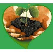Средства защиты растений от болезней фото