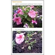 Органическое удобрение «Sidera Organic» фото