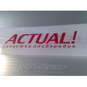 Сотовый поликарбонат Actual, Novattro, Rational (2,1*6м) фото