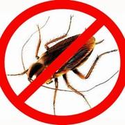 Дезинсекция. Уничтожение прусаков и тараканов в 2-хкомнатной квартире. фото