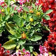 Устройство цветников и клумб №43 фото