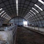 Строительство быстровозводимых коровников. фото