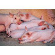 комбикорма и БВМД для всех видов сельскохозяйственных животных фото