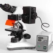 Микроскоп люминесцентный бинокулярный MC 300 (FХP) фото