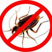 Услуги по уничтожению таракана фото