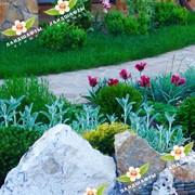 Проектирование, посадка цветников. фото