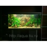 Обслуживание аквариумов в Калуге фото