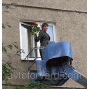 Цветы в окно фото