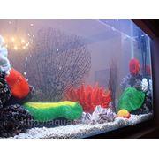 Изготовление аквариумов под ключ фото