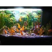 Оформление и обслуживание аквариумов фото