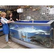 Промышленный аквариумный комплекс фото
