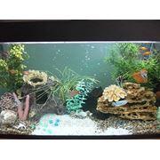 Обслуживание аквариумов и террариумов фото