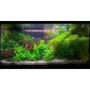 Сервисное обслуживание аквариумов фото