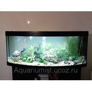 Обслуживание любых аквариумов г.Москва