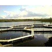 Комплексное обследование водоёмовдля выращивания рыбы фото