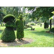 Ландшафтный дизайн. Прекрасному дому – чудесный сад фото