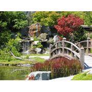 Ландшафтный дизайн,автоматический полив,бассейны,водопады, беседки,дорожки, освещение. фото