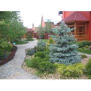 Ландшафтный дизайн и озеленение фото