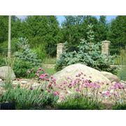 Каменистый сад -рокарий. фото