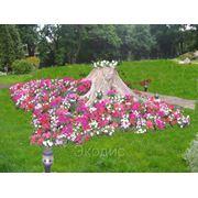 Устройство цветников фото