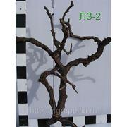 Натуральная виноградная лоза фото