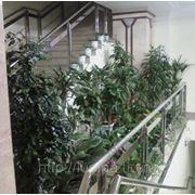 Офисное озеленение фото