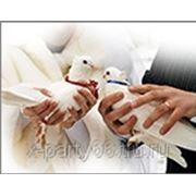 Свадьба в Екатеринбурге 319-11-72 фото