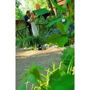 Свадебный фотограф. фото