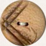 Пуговицы из дерева фото