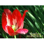 Цветы садовые, фото фото