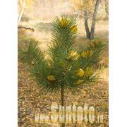 Осень фото фото