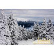 Зима фото фото