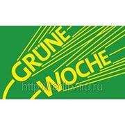 Берлин. Посещение Международной зелёной недели в Берлине 2013 Green Week фото