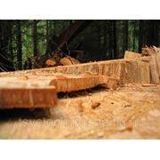 Выкорчёвка поросли,спил деревьев,удаление сорняков. фото