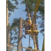 Удаление и спил деревьев фото