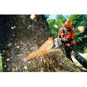 Спил аварийных и опасных деревьев фото
