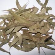 Эвкалипт(лист) фото