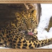 Картина из стекла Животные 22 фото