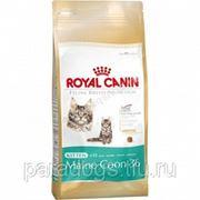 Корм Royal Canin Д/Кошек Киттен Мэйн Кун 2кг. фото