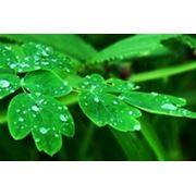 Перечень мероприятий по охране окружающей среды фото
