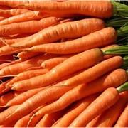 Морковь опт фото