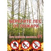 Берегите лес от пожара фото