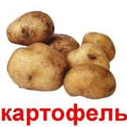 Покупаем продовольственный картофель фото