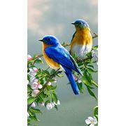 Райские птички фото
